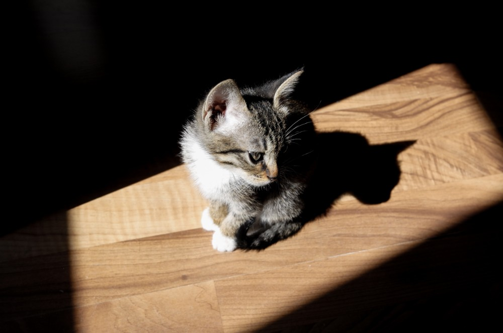 Wood floors safe for animals